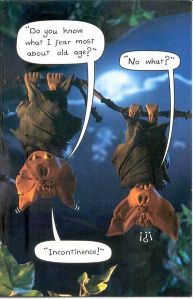 Elderly Bats