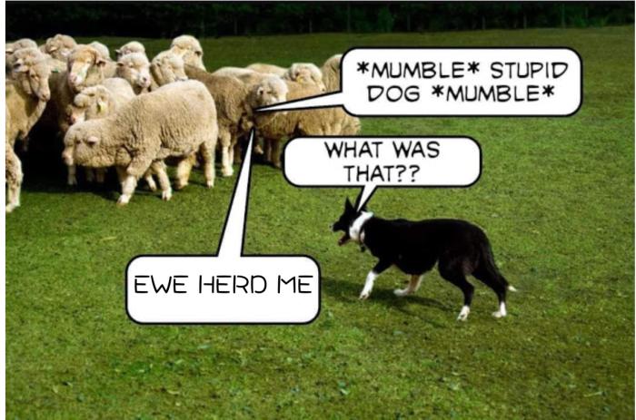 Ewe Herd Me