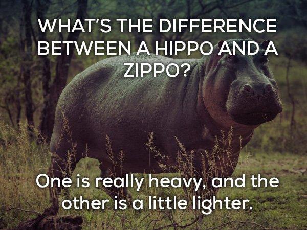 Hippo-Zippo