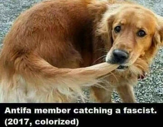 Antifa-catching fascist