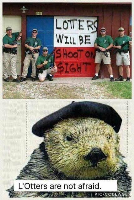L'otters shot on sight