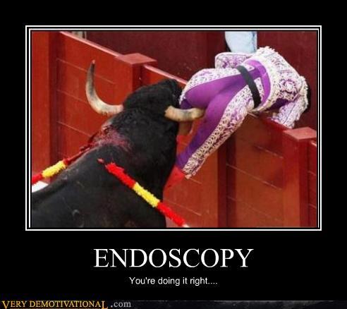 endoscopy-bull