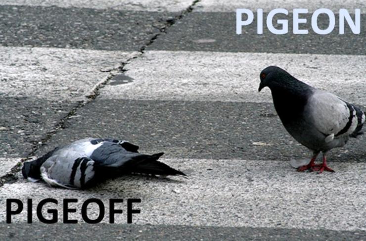 Pigeon-Pigeoff