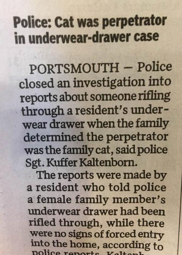 underwearcat