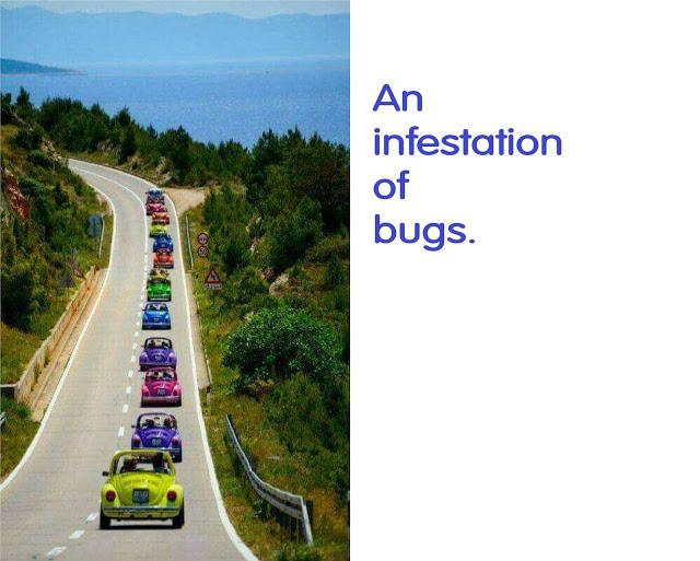 Bug infestation