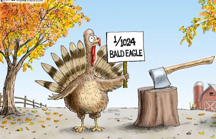 dna-turkey-1:1024th bald eagle