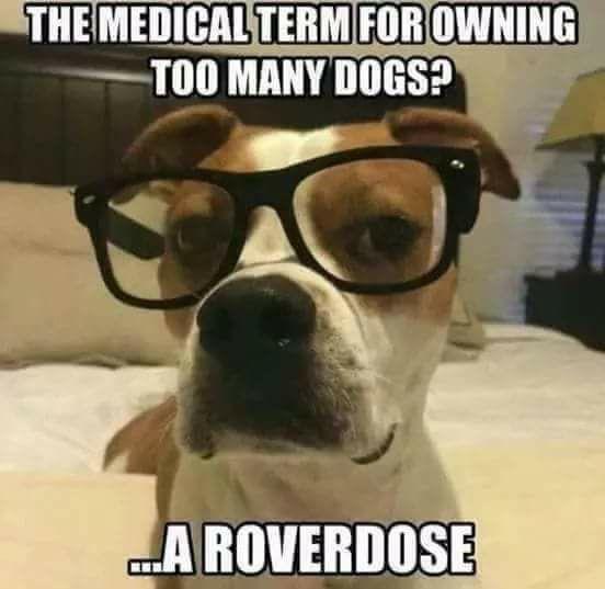 Roverdose