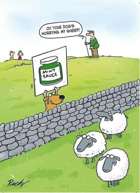 Worried Sheep