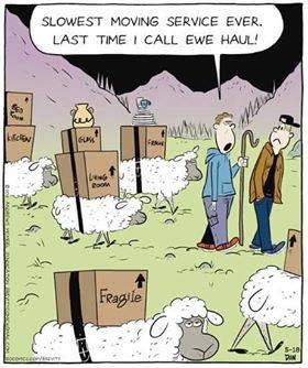 Ewe Haul