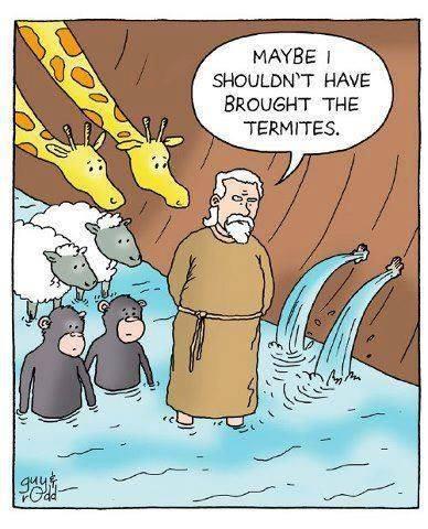 Noah-termites