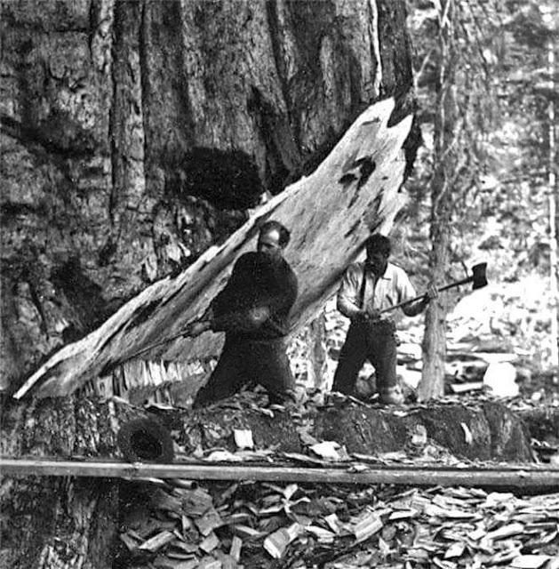 WWLLTM-loggers