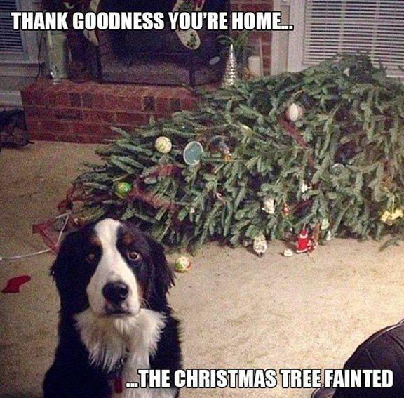 Christmas tree fainted