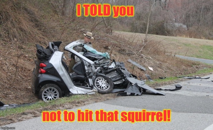 Smart car-squirrel