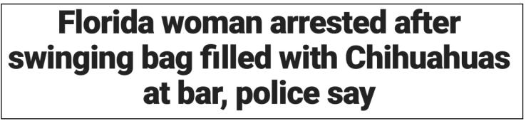 Headline-Floriduh-Chihuahuas