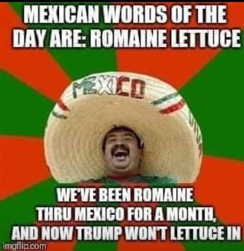 MWOD-lettuce romaine