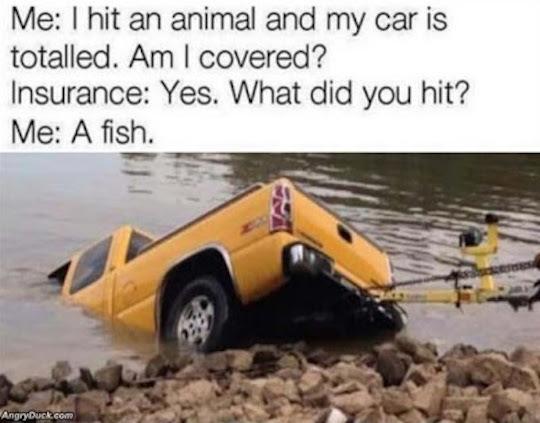 i_hit_an_animal