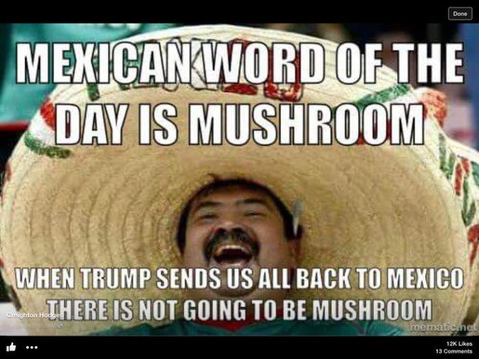Mexican WOTD-Mushroom