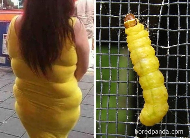 Who wore it better-caterpillar