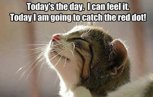 Cat the laser dot