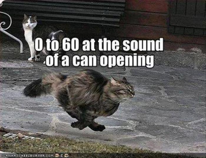 fast-cat