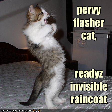 Flasher cat