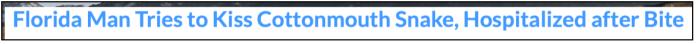 Floriduh Man kisses cottonmouth