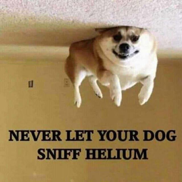Helium dog