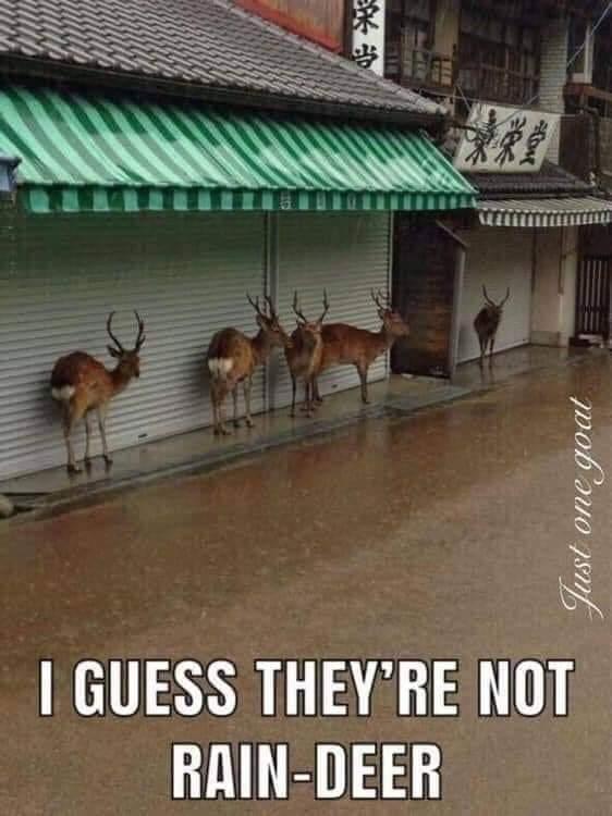 not rain deer
