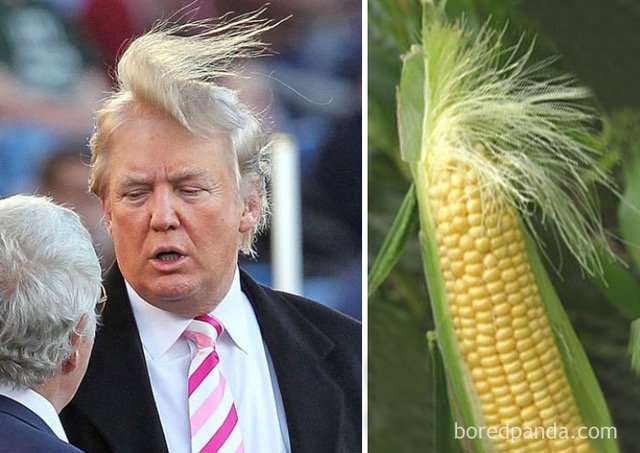 who wore it better-corn