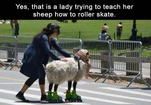 A real Sheep Skate
