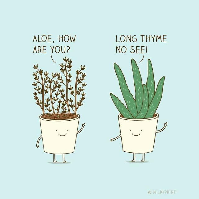 Aloe how are you