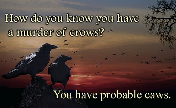 Groaner-probable caws