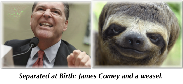 Separated at Birth: James Comey_Weasel