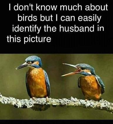 Wedded bliss-birds