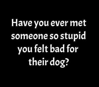 snark-stupid-dog