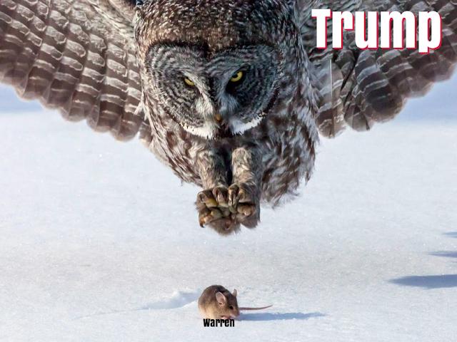 trump_vs_fauxchahontas