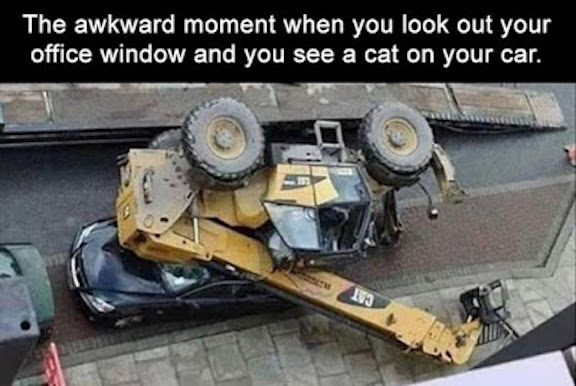 Awkward-moment-when-you-see-a-cat-on-your-car