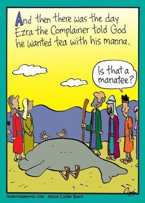 Manna tea