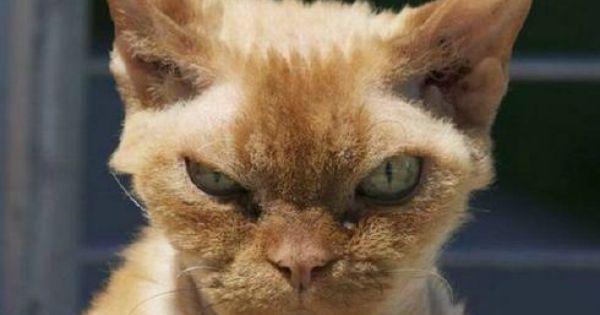 Stank eye-cat