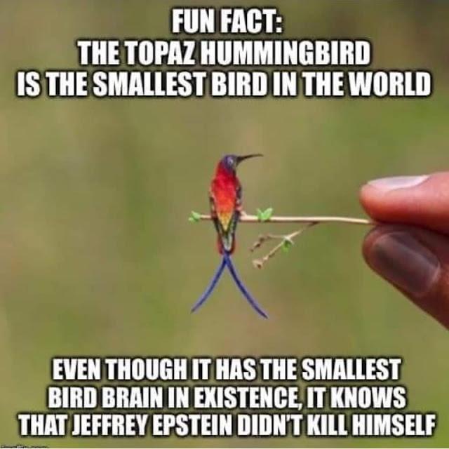Epstein-hummingbird