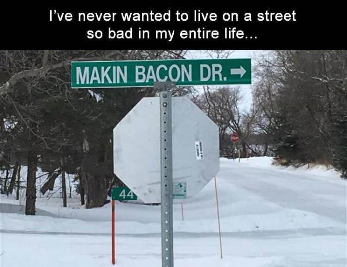 Makin Bacon dr.