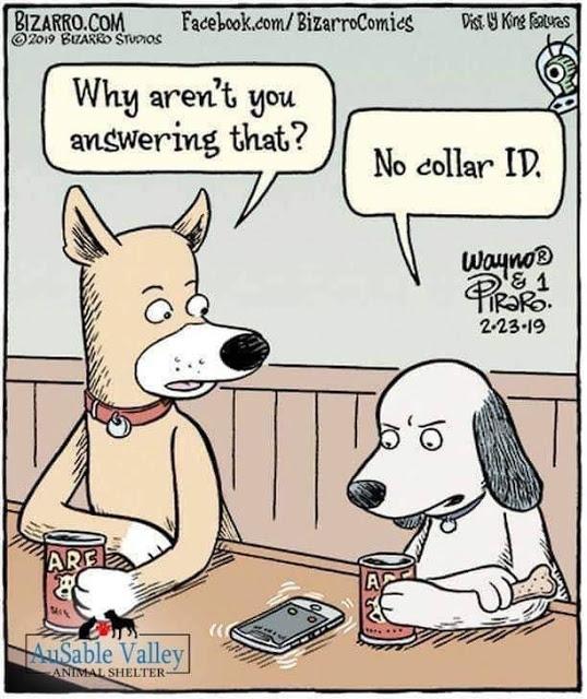 No collar IDJPG