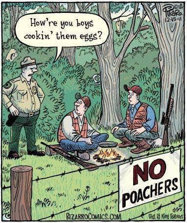 No poachers