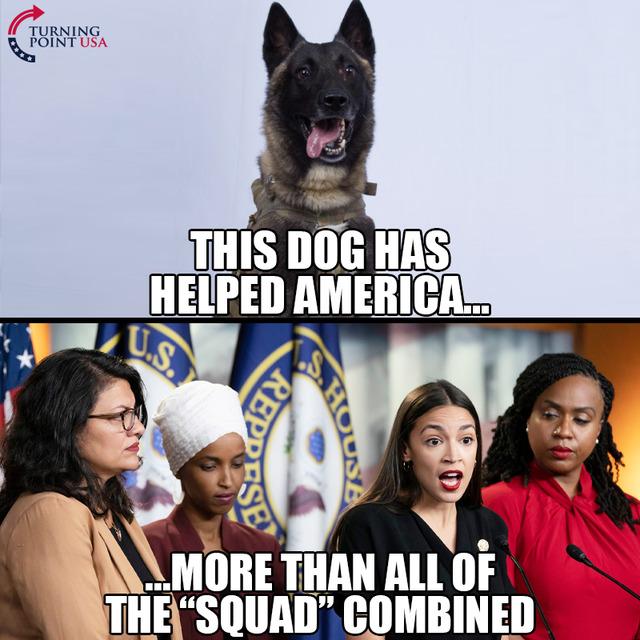 Squad-dog