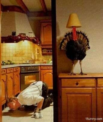 thanksgiving_turkey in hiding