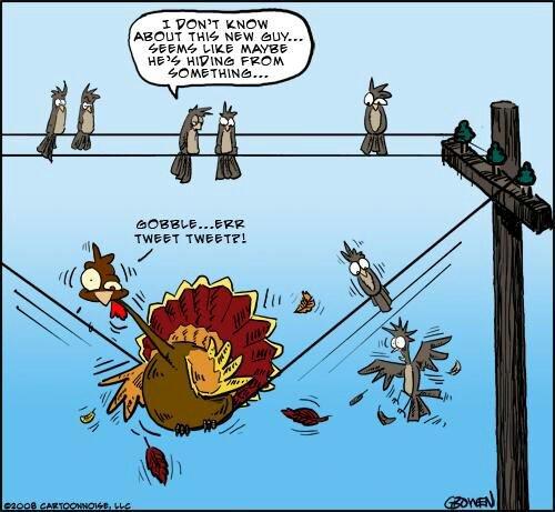 Turkey get away