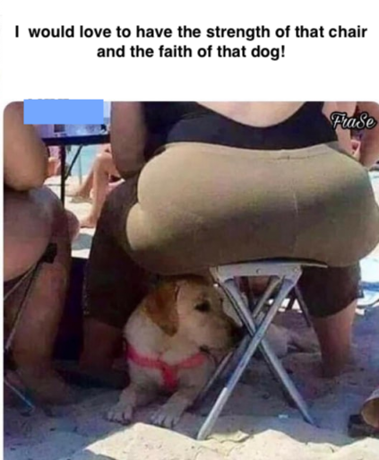 Dog's faith-Chair's strength