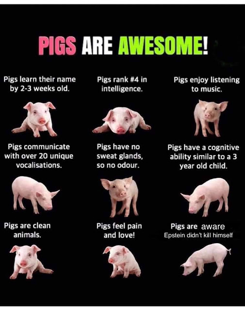 Epstein-pigs