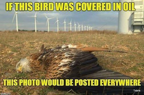 If this bird were covered in oil