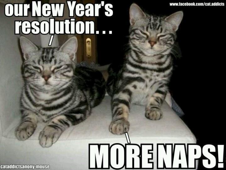 New-Year-Cat-Nap